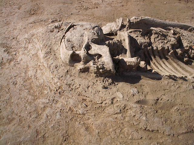Hijar, detalle esqueletos
